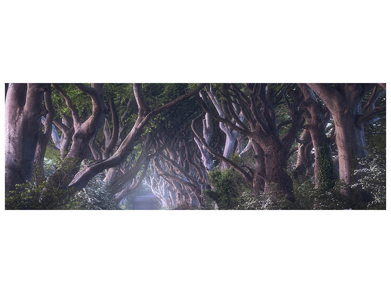 Panoramic Canvas Print The Dark Hedges