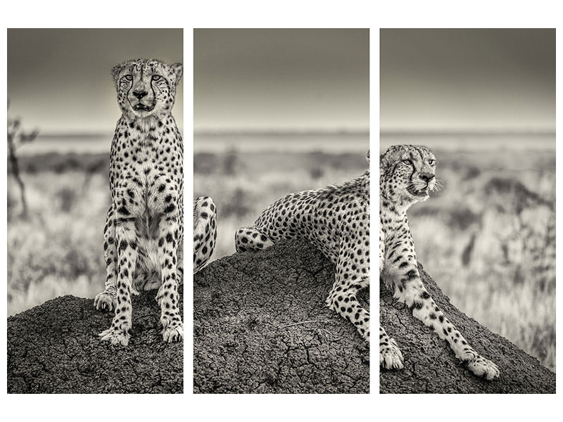 3 Piece Canvas Print Two Cheetahs Watching Out