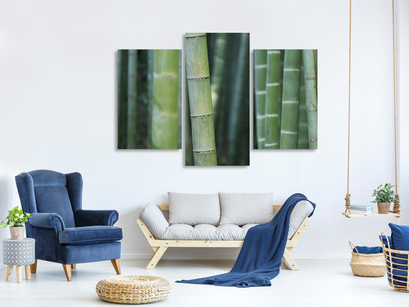 Modern 3 Piece Canvas Print Bamboo in XXL