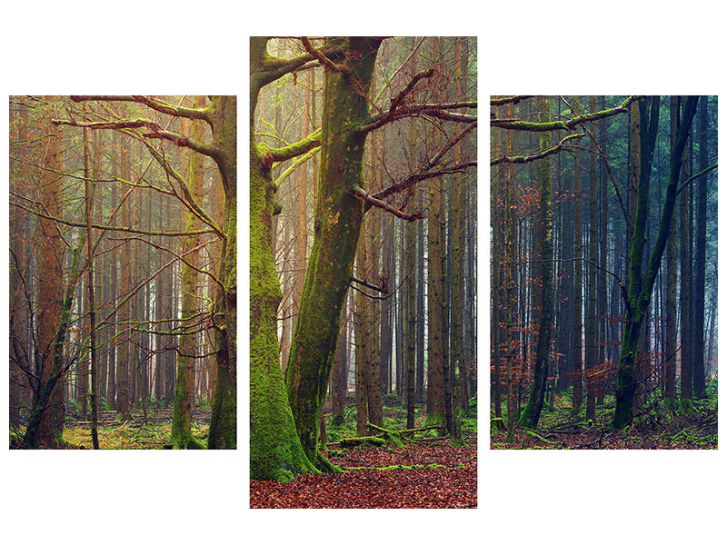 Modern 3 Piece Canvas Print Alone in the woods