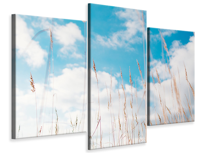 Modern 3 Piece Canvas Print Blades of grass in the sky
