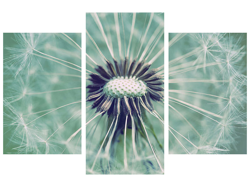 Modern 3 Piece Canvas Print Close Up Dandelion