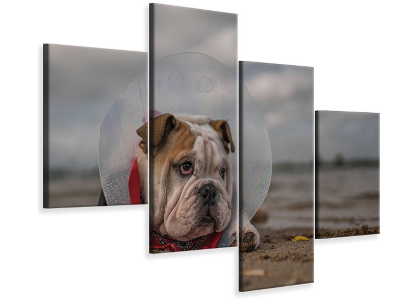 Modern 4 Piece Canvas Print The Vet Gave Me This CollarAnd I Am Not Happy With It