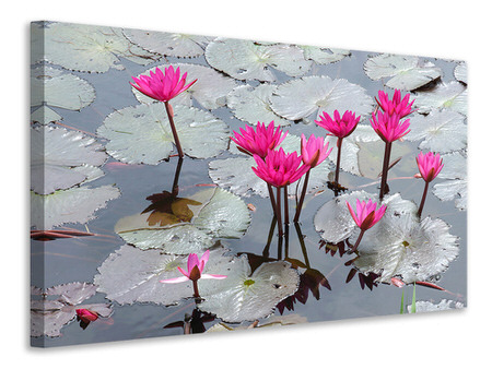 Canvas print Jump In The Lily Pond