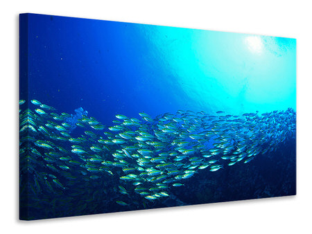 Canvas print Shoal Of Fish