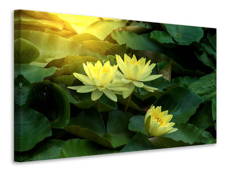 Canvas print Wild Lotus